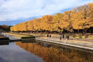 昭和紀念公園(東京)