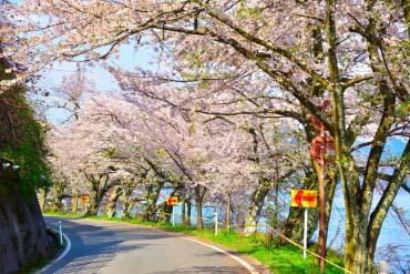 海津大崎(滋賀・琵琶湖)