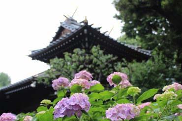 Hakusan Shrine(Tokyo)
