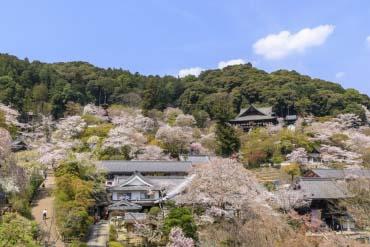 Hasedera Temple(Nara)