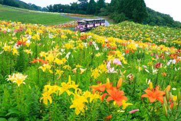 Biwako Mt. Hakodateyama Lily Garden(Shiga & Lake Biwa )
