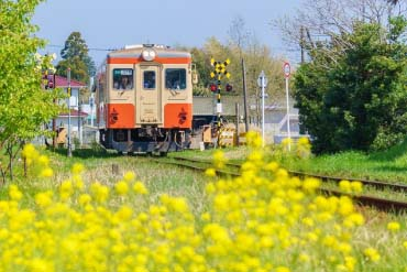 Đường sắt Isumi, tàu Nanohana(Chiba)