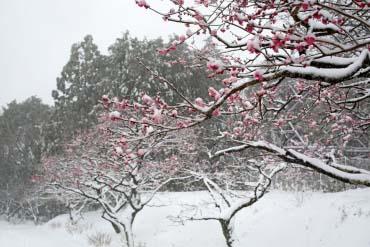 岩本山公園(静岡)