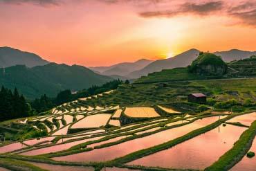 Maruyama's Thousand Rice Terraces