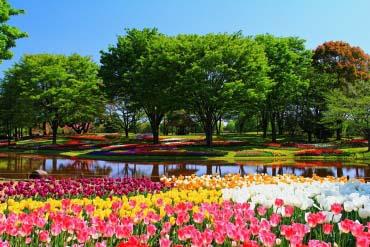 Showa Kinen Park(Tokyo)