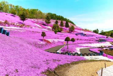 東藻琴芝櫻公園(北海道的其他景區)