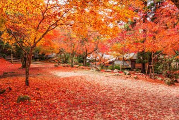 红叶谷公园(广岛·宫岛)
