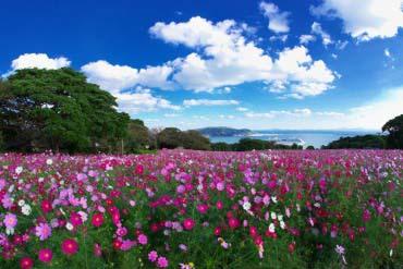 Nokonoshima Island(Fukuoka & Hakata)