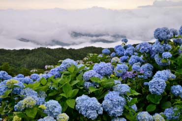 Okawara Plateau(Tokushima)