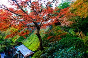 Daikozenji Temple(Saga)