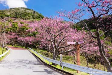 Yaedake Sakura Forest Park