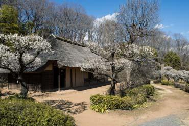 Taman Yakushi-Ike