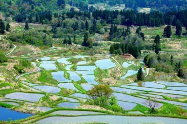 Cánh đồng đèo Hoshi(Niigata)
