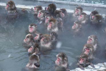 函館市 猴山溫泉