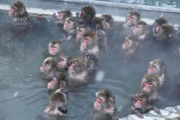 函館市 サル山温泉