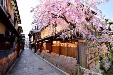 Cherry trees of Gion Shirakawa