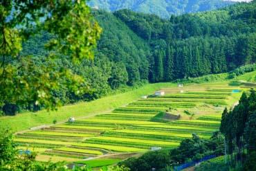 Obasute Rice Terraces(Nagano)