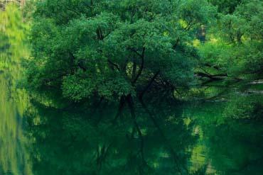 Hồ Midori