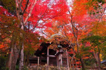 瑞宝寺公园(兵库、神户)