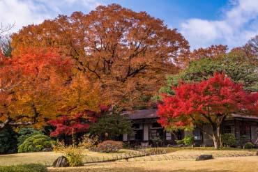 小石川後楽園 (東京)