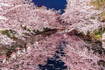 Công viên Hirosaki(Aomori)