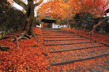Anrakuji Temple(Kyoto)