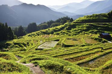 Maruyama's Thousand Rice Terraces(Mie)