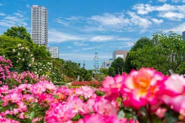 大通公园(札幌·小樽)