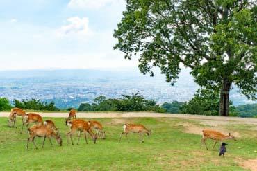 Mt.Wakakusa(Nara)