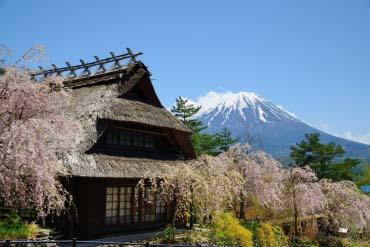 Iyashi no Sato Nenba at Lake Saiko(Mt. Fuji)