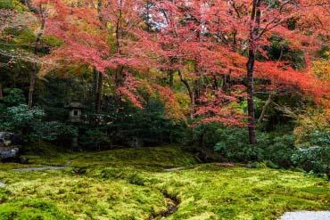 Rurikoin Temple(Kyoto)