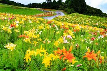 Biwako Mt. Hakodateyama Lily Garden