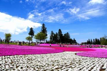 羊山公园(埼玉)