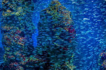 Osaka Aquarium Kaiyukan(Osaka)