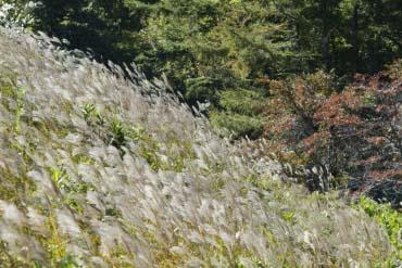 茶臼山高原(愛知)