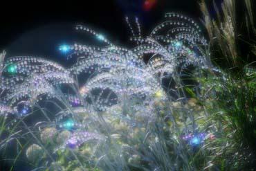 箱根ガラスの森美術館(箱根)