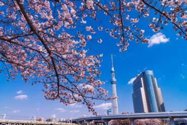 Tháp Tokyo Sky Tree