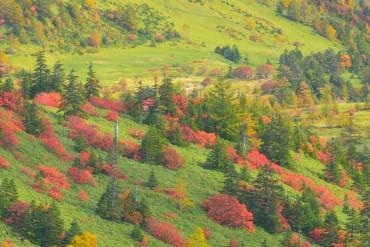 Shibu Toge Pass(Nagano)