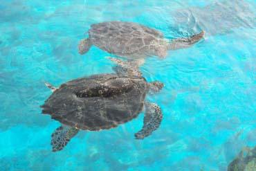 Okinawa Churaumi Aquarium(Okinawa)