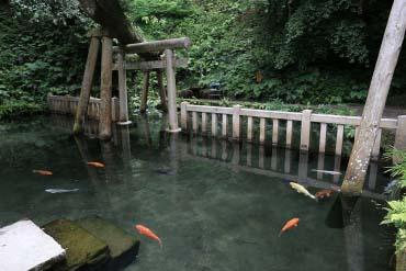 Mitarai Pond, Kashima Shrine(Ibaraki)