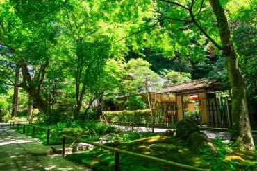 Meigetsuin Temple(Kamakura)