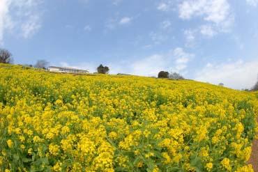 Mother Farm(Chiba)