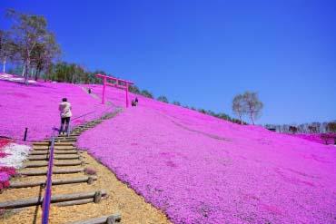 東藻琴芝桜公園(北海道その他)