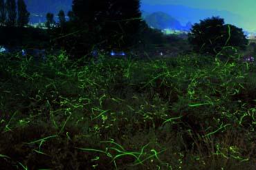 萤火虫童谣公园