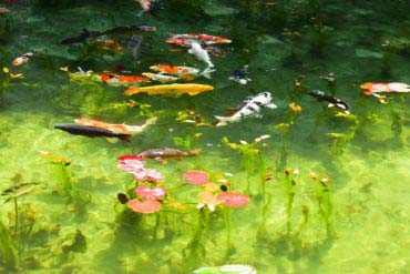 Hồ Monet(Gifu)
