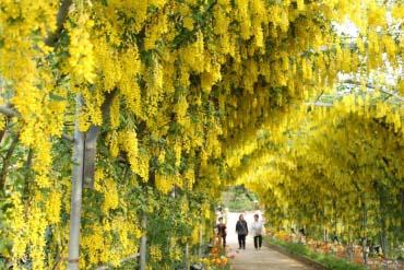 足利花卉公园(枥木)