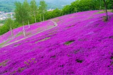 Taman Takinoue(Other Areas of Hokkaido)