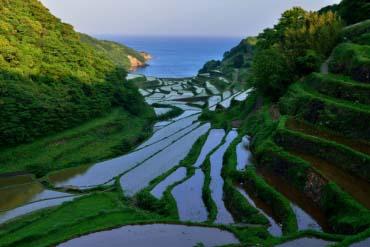 Hamanoura Rice Terraces(Saga)