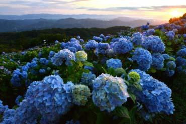Cao nguyên Okawara