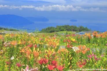 びわこ箱館山ゆり園(滋賀・琵琶湖)